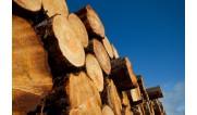 Для древесины (1)
